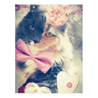 Cartão Postal Estilo retro do gatinho bonito do racum de Maine