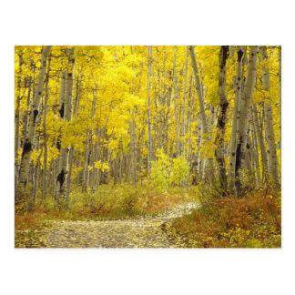 Cartão Postal Estrada com cores do outono e álamos tremedores em