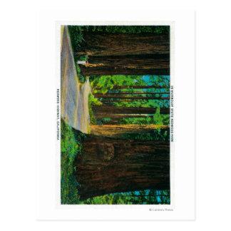 Cartão Postal Estrada da sequóia vermelha no parque da sequóia