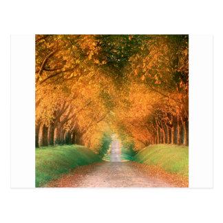 Cartão Postal Estrada France do outono da árvore