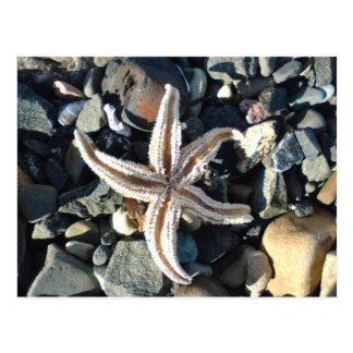 Cartão Postal Estrela do mar