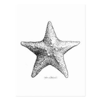 Cartão Postal Estrela do mar que tira a arte da estrela de mar