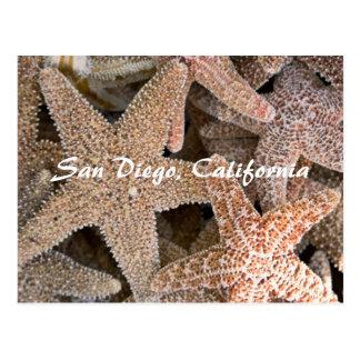 Cartão Postal Estrela do mar toda ao redor, San Diego,