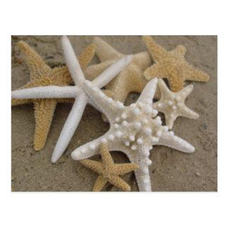 Cartão Postal Estrelas de mar