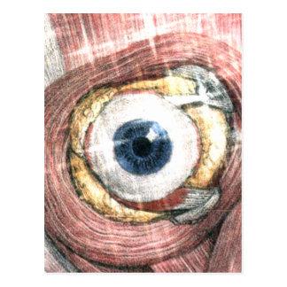 Cartão Postal Estrelas em seus olhos