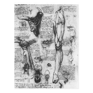 Cartão Postal Estudos anatômicos de Leonardo Vinci- (laringe &