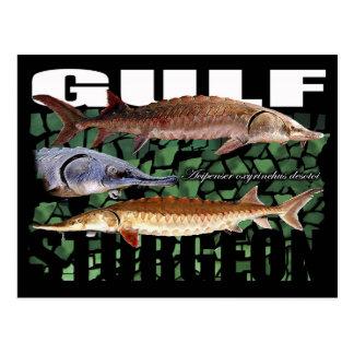 Cartão Postal Esturjão-Colagem-Cartão do golfo