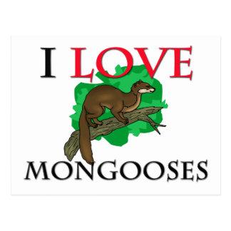 Cartão Postal Eu amo mangustos