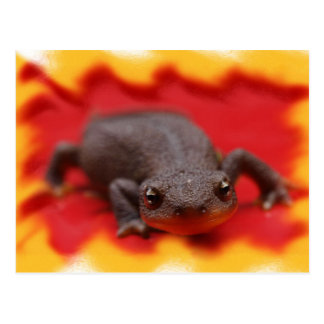 Cartão Postal Eu amo Newts
