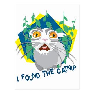 Cartão Postal Eu encontrei o catnip