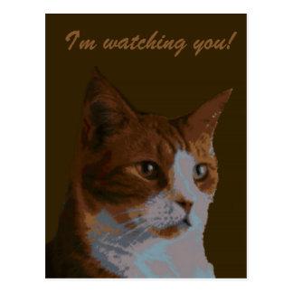 Cartão Postal Eu estou olhando-o postacard do gato