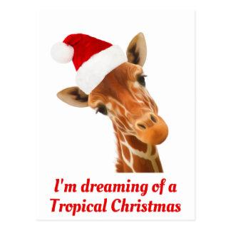 Cartão Postal Eu estou sonhando de um t-shirt tropical do Natal