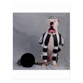 Cartão Postal Eu não sou um cão mau! Isto é tão injusto!