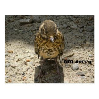 Cartão Postal Eu sou cascalho selvagem pesaroso do pássaro