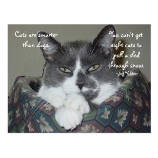 Cartão Postal Eu sou gato…