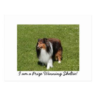 Cartão Postal Eu sou um Sheltie de vencimento premiado!