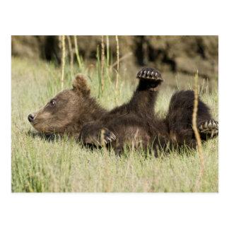 Cartão Postal EUA. Alaska. Filhote de urso litoral de Brown na