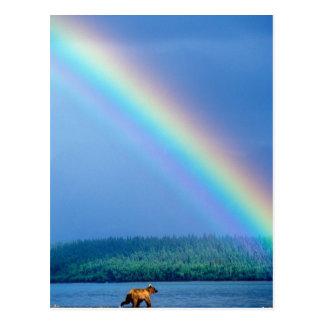 Cartão Postal EUA, Alaska, parque nacional de Katmai, urso