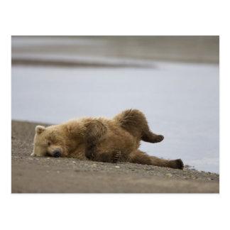 Cartão Postal EUA, Alaska, parque nacional de Katmai, urso de