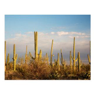Cartão Postal EUA, arizona, parque nacional de Saguaro, Saguaro