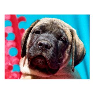 Cartão Postal EUA, Califórnia. Filhote de cachorro do Mastiff