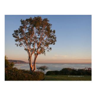 Cartão Postal EUA, Califórnia, Laguna Beach, árvore no por do