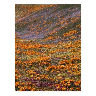 Cartão Postal EUA, Califórnia, montanhas de Tehachapi, 2