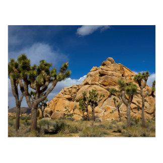 Cartão Postal EUA, Califórnia, parque nacional de árvore de
