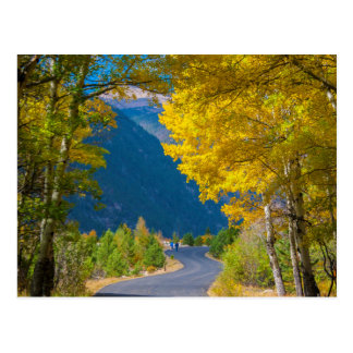 Cartão Postal EUA, Colorado. Estrada flanqueada por álamos