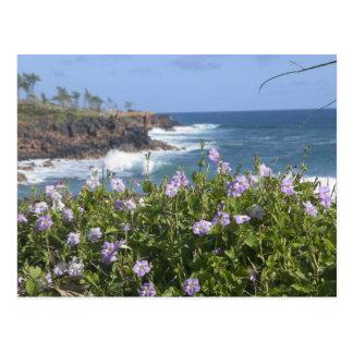 Cartão Postal EUA, Havaí, Kauai, perto de Kapaa, noroeste