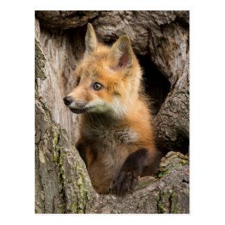 Cartão Postal EUA, Minnesota, arenito, animais selvagens 14 de