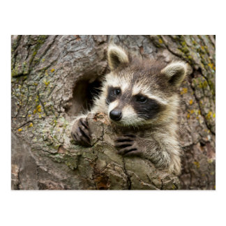 Cartão Postal EUA, Minnesota, arenito, animais selvagens 16 de