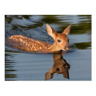 Cartão Postal EUA, Minnesota, arenito, animais selvagens 19 de