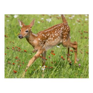 Cartão Postal EUA, Minnesota, arenito, animais selvagens 20 de