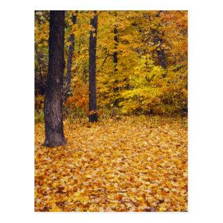 Cartão Postal EUA, Missouri, o Condado de Boone, floresta do