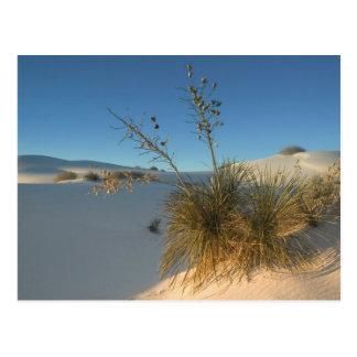 Cartão Postal EUA, New mexico, nacional branco 3 das areias
