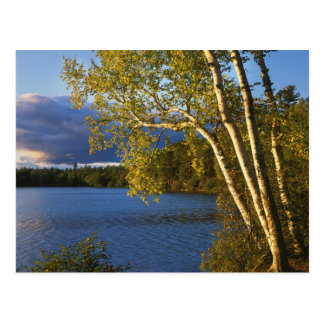 Cartão Postal EUA, New York, parque de Adirondack e conserva