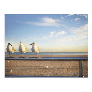 Cartão Postal EUA, Nova Iorque, Coney Island, três gaivotas