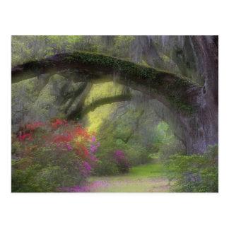 Cartão Postal EUA, South Carolina, jardins da magnólia