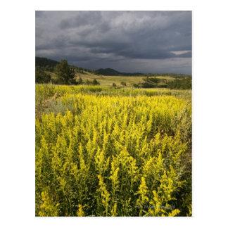 Cartão Postal EUA, South Dakota, flores e tempestade