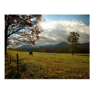 Cartão Postal EUA, Tennessee. Cavalos no vale da angra de Cades
