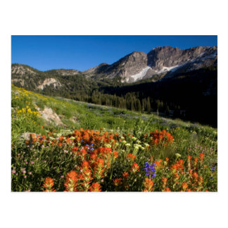 Cartão Postal EUA, Utá, floresta nacional do