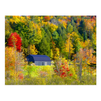 Cartão Postal EUA, Vermont. Foilage da queda ao longo da estrada
