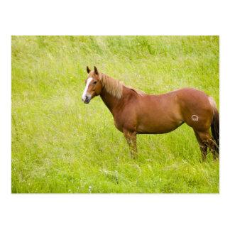 Cartão Postal EUA, Washington, cavalo no campo do primavera, 2