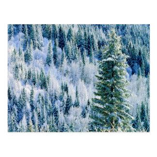 Cartão Postal EUA, Washington, parque estadual do Mt. Spokane,