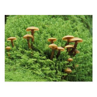Cartão Postal EUA, Washington. Samambaias e cogumelos