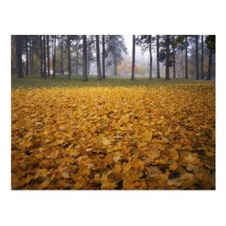 Cartão Postal EUA, Washington, Spokane, parque de Manito, outono