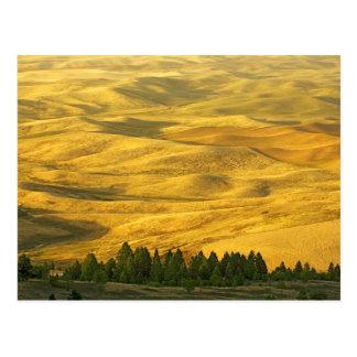 Cartão Postal EUA, Washington, Whitman County, Palouse, trigo