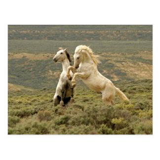 Cartão Postal EUA, Wyoming, o Condado de Carbon. Dois selvagens