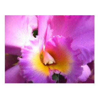 Cartão Postal Euforia da orquídea